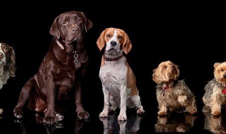 2013-04-24-dogs_header